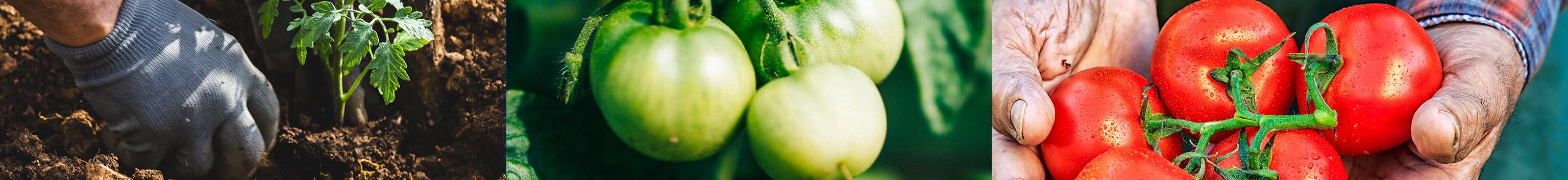 Fruits et légumes bio de saison