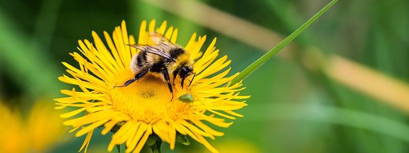 bien se nourrir en préservant la biodiversité